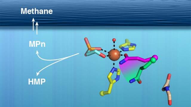 Marine Microbes may be Responsible for Production of Ocean Methane
