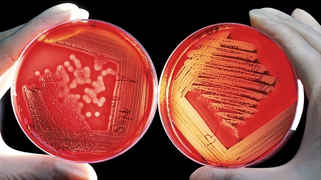 Memory Bank for Forgotten Antibiotics Launched