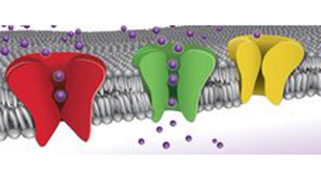 Metrion Biosciences Acquires Rights to Small Molecule Potassium Channel Inhibitors