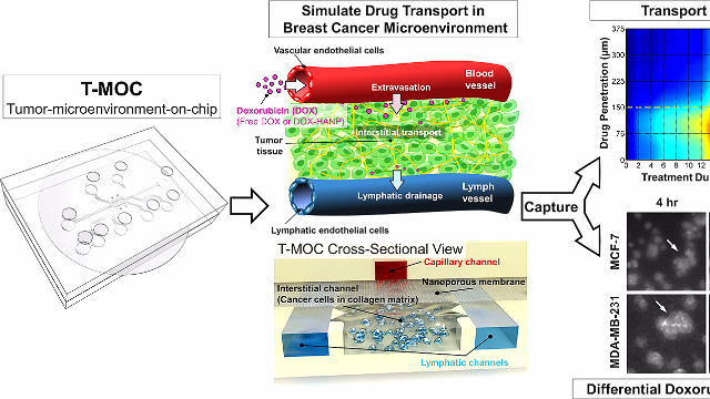 Microfluidic Device Simulates Cancer Treatment as Effectively as Research Animals