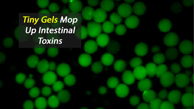 "Microgel Mops Up Toxins Without Harming ""Good"" Bacteria"