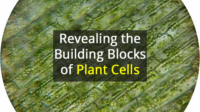 Molecular Machinery that Builds Plant Cell Wall Components Revealed