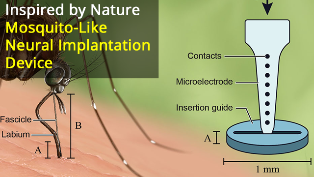 Mosquito-Inspired Neural Implant Solution