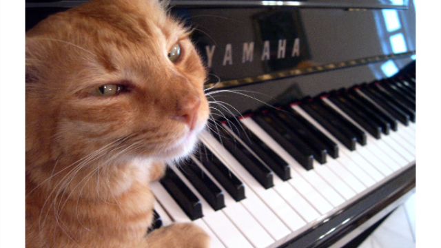 Move over Mozart: Study shows cats prefer their own beat