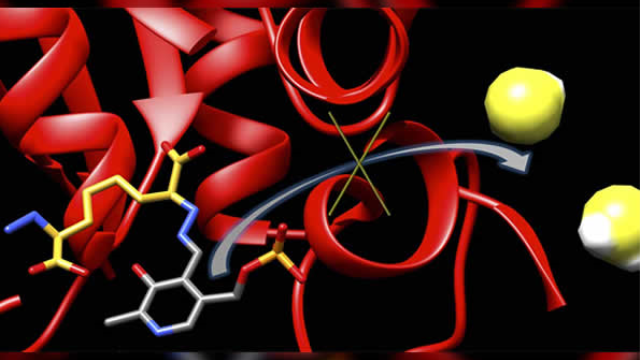 Researchers build molecule to suppress stroke-related enzyme