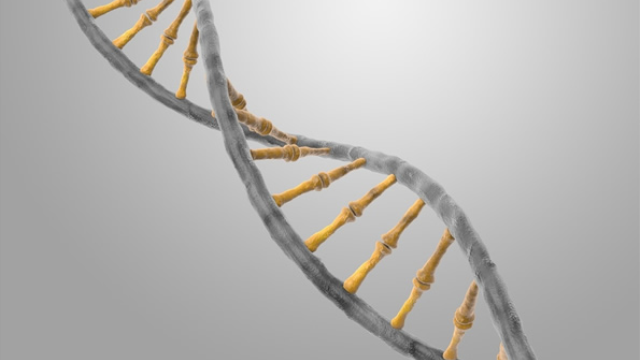 "Biological mechanism passes on long-term epigenetic ""memories"""