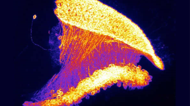 Neuronal calculations consider expectations