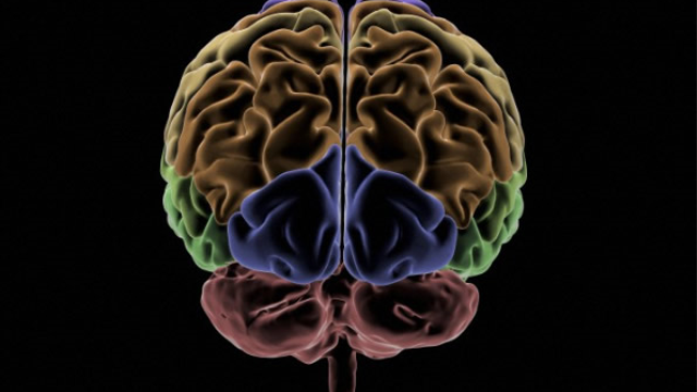 'Ouch zone' in the brain identified