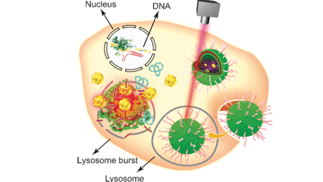 Multifunctional Vehicle Transports CRISPR-Cas9 system to Tumor Cell Genome
