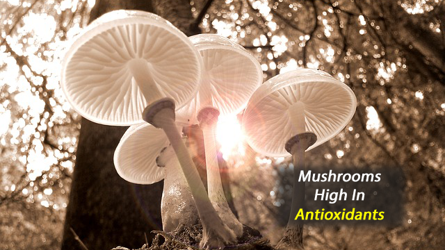Mushrooms Are Full of Antioxidants That May Have Anti-ageing Potential