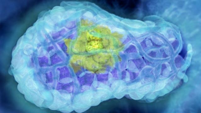 Mutant Protein Tackles DNA Guardian Driving Cancer Development