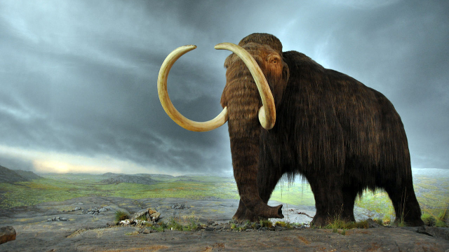 Mutation May Have Helped Mammoths Tolerate the Cold