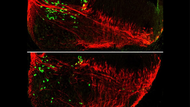Nerve cells use each other as maps