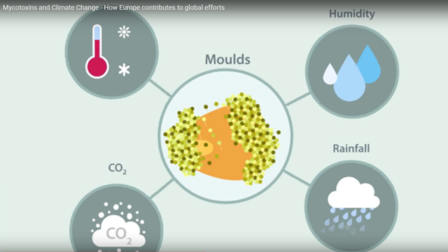 Mycotoxins and Climate Change - How Europe Contributes to Global Efforts