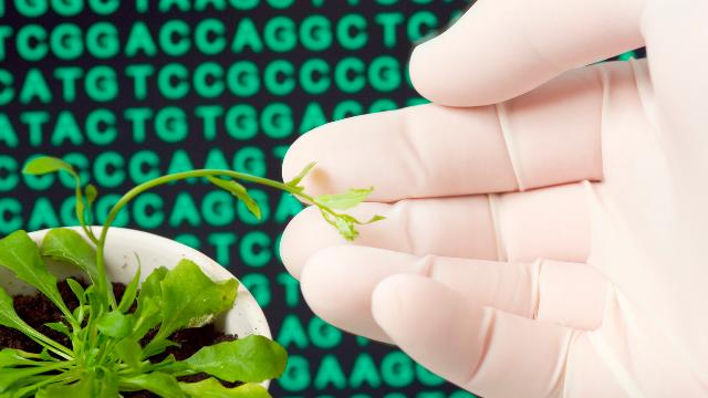 MyDx, Highsmen Genetics Partner on Cannabis Strains Tailored for Specific Effects