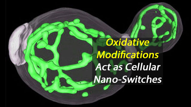 Nano-Switches in the Cell