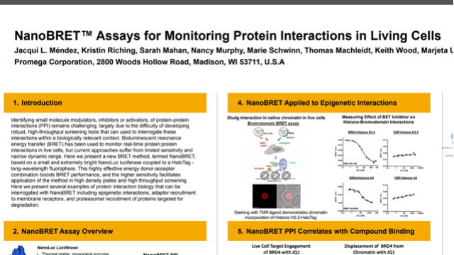 NanoBRET™ Assays for Monitoring Protein Interactions in Living Cells
