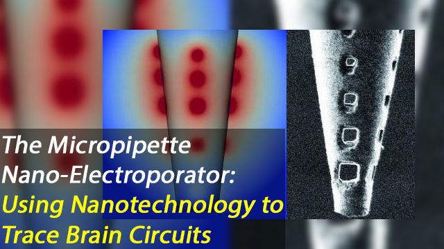 Nanofabrication of Micropipettes Enables Simultaneous Electroporation of 250 Brain Cells