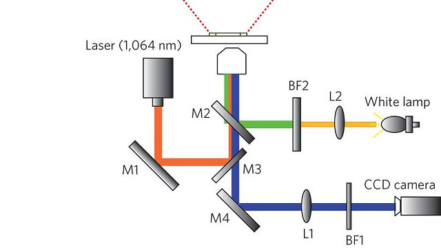 Nanotweezers that can Trap and Detect Biomolecules