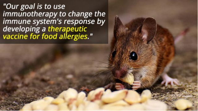 Nasal Vaccine Suppresses Peanut Allergies in Mice