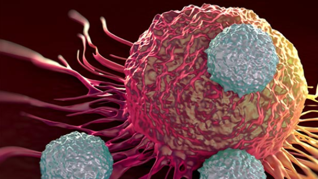 Natural Killer Cells Could Be Key to Cancer Immunotherapy