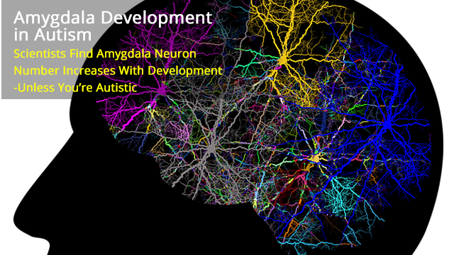 Neuron Numbers Increase in the Amygdala from Birth to Adulthood, But Not in Autism