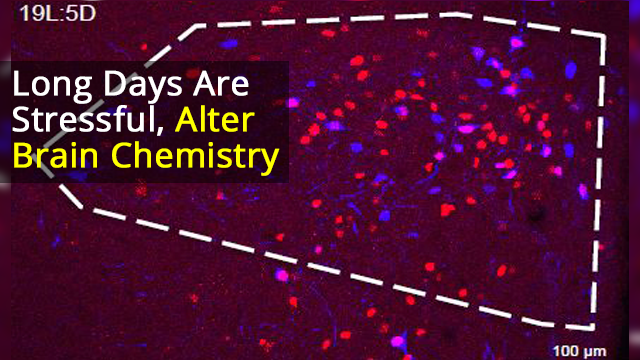 Neuronal Activity Regulates Neurotransmitter Switching in the Adult Brain