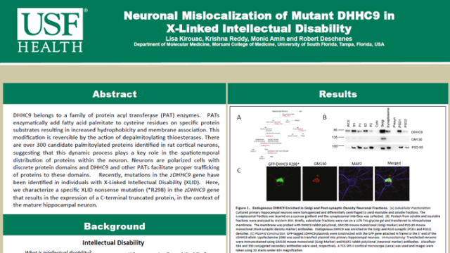 Neuronal Mislocalization of Mutant DHHC9 in X-Linked Intellectual DIsability