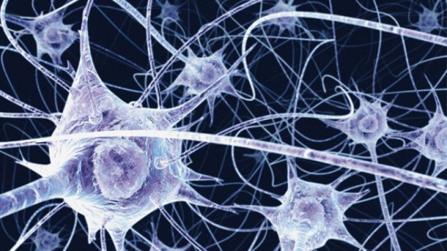 Researchers survey protein family that helps the brain form synapses