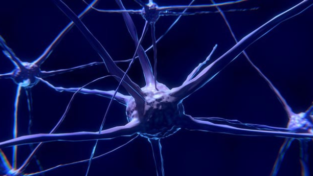Neurons Can Turn Against Themselves