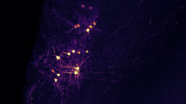 Neurons that Fire Together, Wire Together? Not Always
