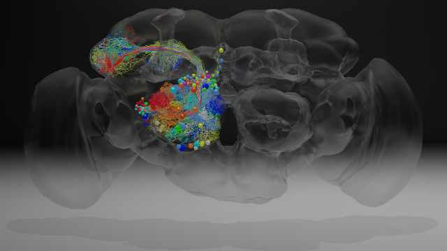 Neuroscience Milestone: Complete fly brain imaged at nanoscale resolution