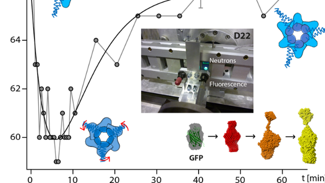 Neutron Scattering Provides New Insight into Protein Substrate Processing