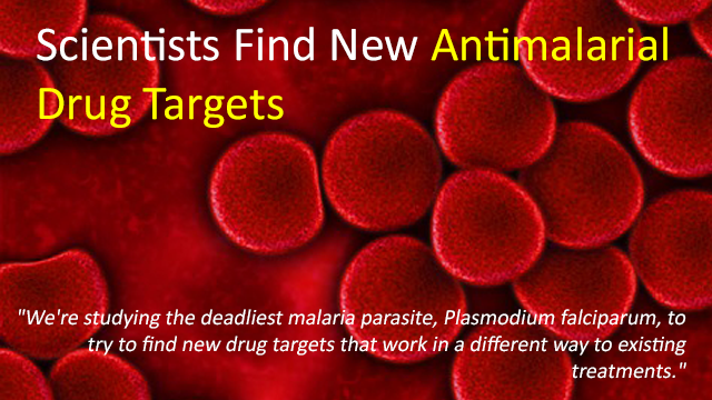New Antimalarial Drug Targets Discovered