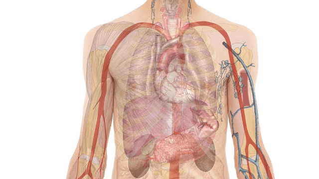 New Biomarkers for Heart and Lung Disease Found