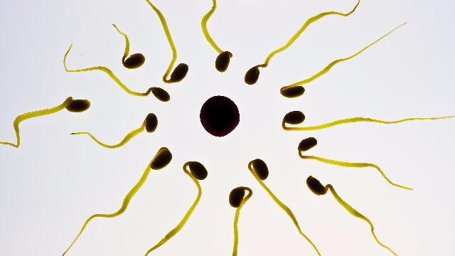 New Method of Preserving Sperm Stem Cells Developed