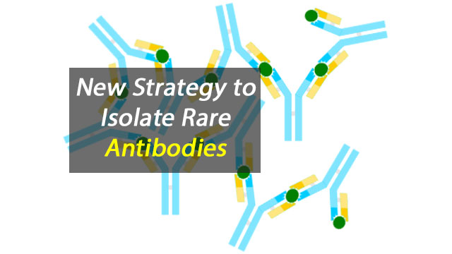 New Rare Antibody Isolation Strategy