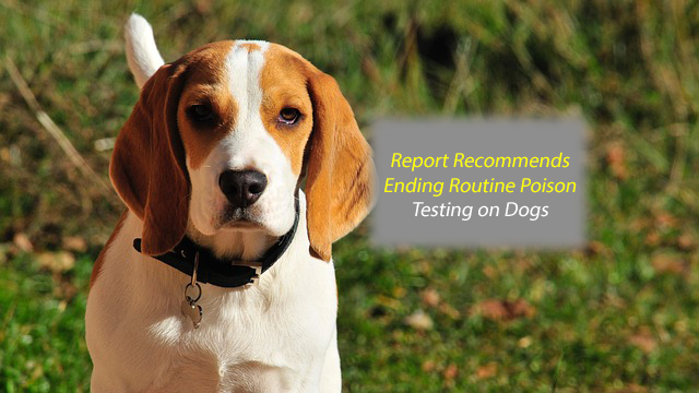 New Report Recommends Ending Routine Poisoning Test on Dogs