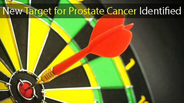 New Target for Prostate Cancer Identified