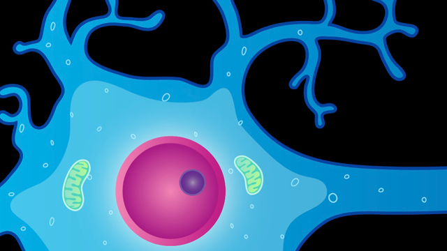 NIA, JPND Announce Effort to Enhance Transatlantic Collaboration on Neurodegenerative Disease Research