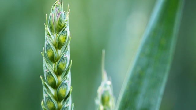 Nitrogen Fixation Engineering in Cereal Crops Moves a Step Closer
