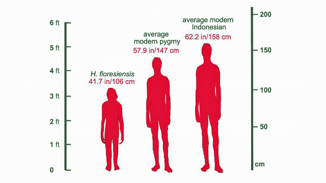 No Genetic Link Between Pygmy People and Extinct 'Hobbits'