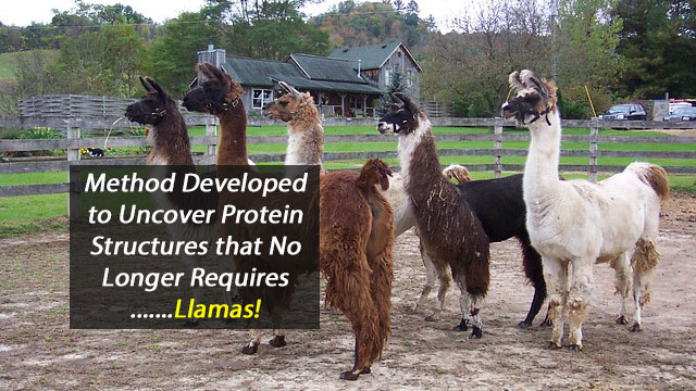 No Llamas Required