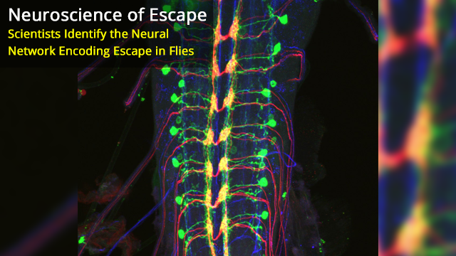 Nociceptive Interneurons Control Modular Motor Pathways to Promote Escape Behavior