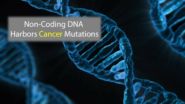 Non-Coding DNA Contains Cancer Mutations