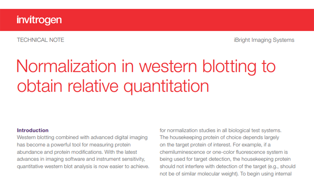 Normalization in Western Blotting to Obtain Relative Quantitation