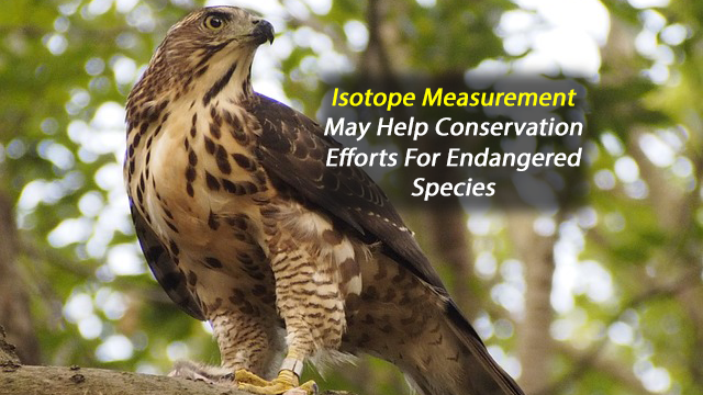 Novel Isotope Tracking Method Offers Hope for Threatened Species
