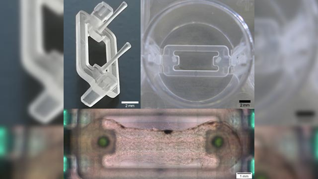 Novel Microplate 3D Bioprinting Platform for Engineering Muscle and Tendon Tissues