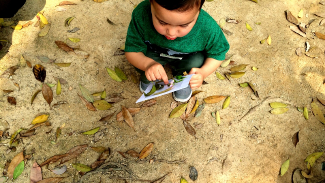 Novel Scale Measures Children's Connection to Nature