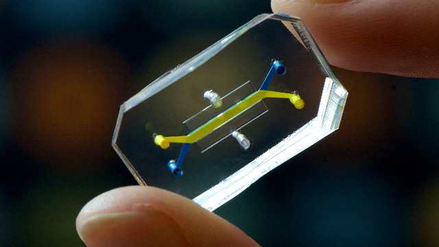 Novel Technology Expands the Use of Organs-on-chips